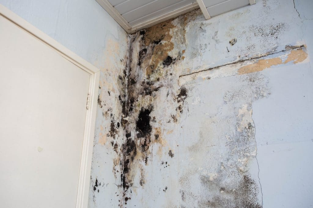 Clean up Mold